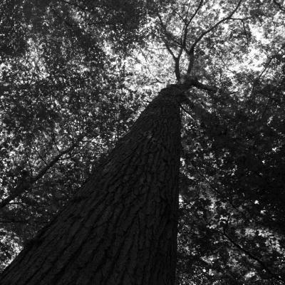 Groupama donates the trees to rebuild Notre-Dame de Paris